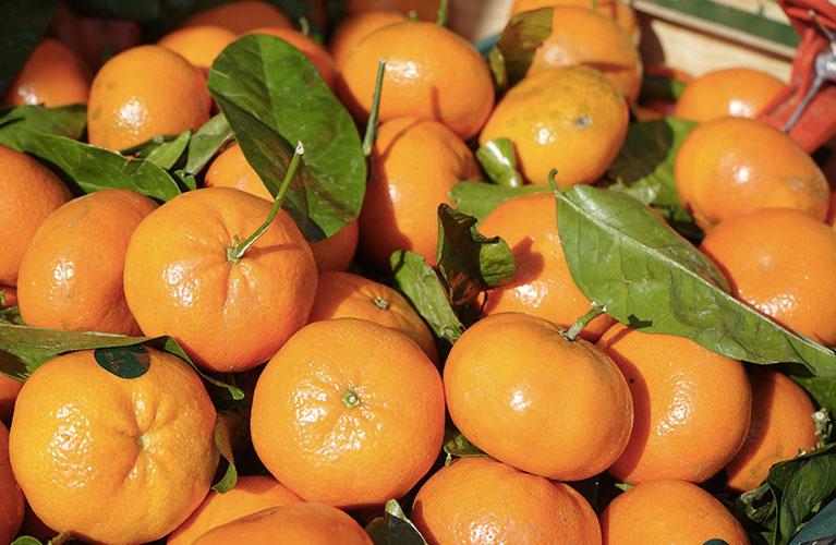 Le Clementine di Taranto