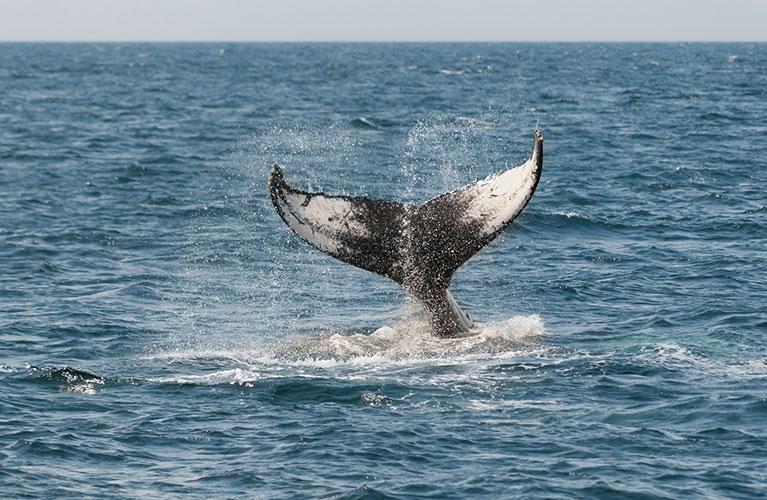 L'incredibile storia della balena di Taranto